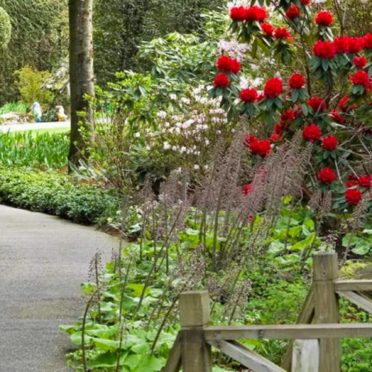花自然赤の iPhone7 壁紙