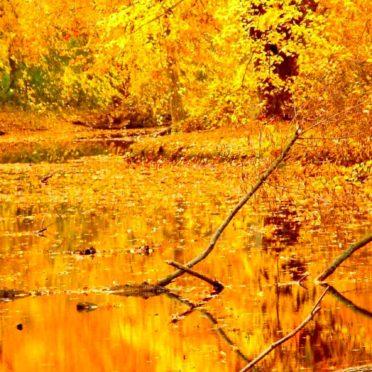 景色自然黄の iPhone7 壁紙