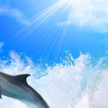 海イルカ太陽の iPhone7 壁紙