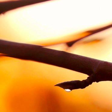 クールぼかし木の iPhone7 壁紙