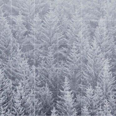 風景森雪白棚罫線の iPhone7 壁紙