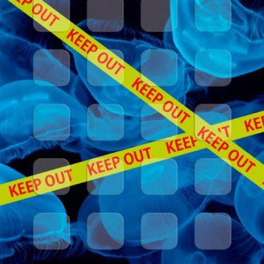 クラゲ黒青棚keepoutの iPhone7 壁紙