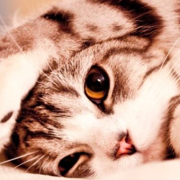 動物猫の iPhone7 壁紙