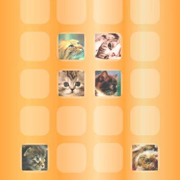 棚猫橙の iPhone7 壁紙