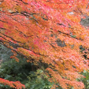 風景紅葉自然の iPhone7 壁紙