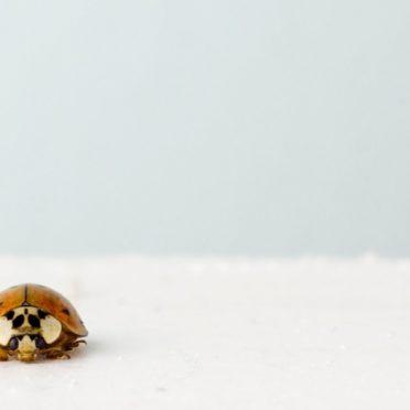 風景虫雪の iPhone7 壁紙