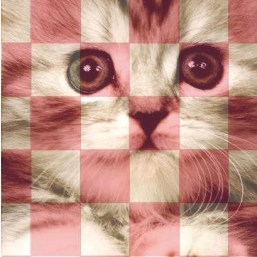 棚猫赤紫の iPhone7 壁紙