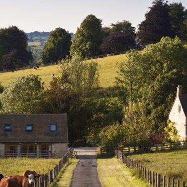 風景農場緑牛の iPhone7 壁紙